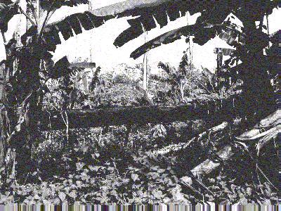 regenwald brasilien abholzung